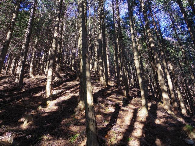 三ツ峠山(本社ヶ丸~清八山) 植林帯【登山口コースガイド】