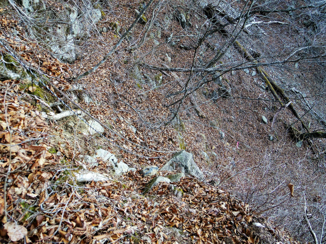 三ツ峠山(本社ヶ丸~清八山) 北口下山道【登山口コースガイド】