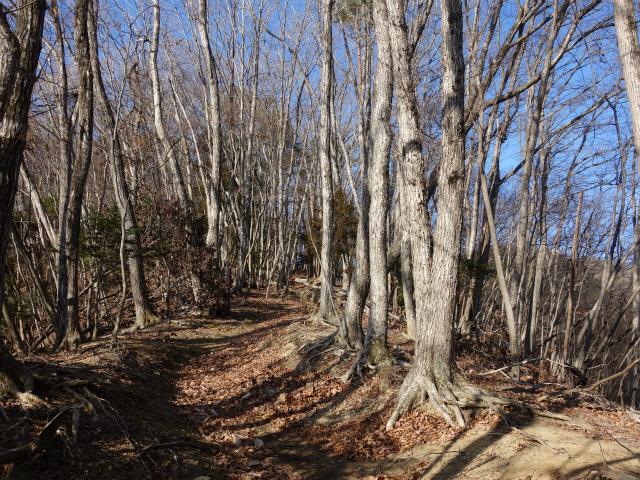 鷹ノ巣山(六ツ石山~石尾根縦走路)登山口コースガイド 落葉樹林帯の稜線【登山口ナビ】