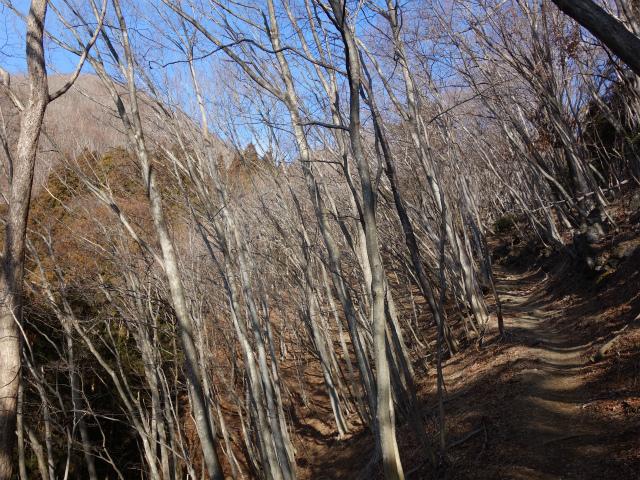 鷹ノ巣山(六ツ石山~石尾根縦走路)登山口コースガイド 三ノ木戸山【登山口ナビ】