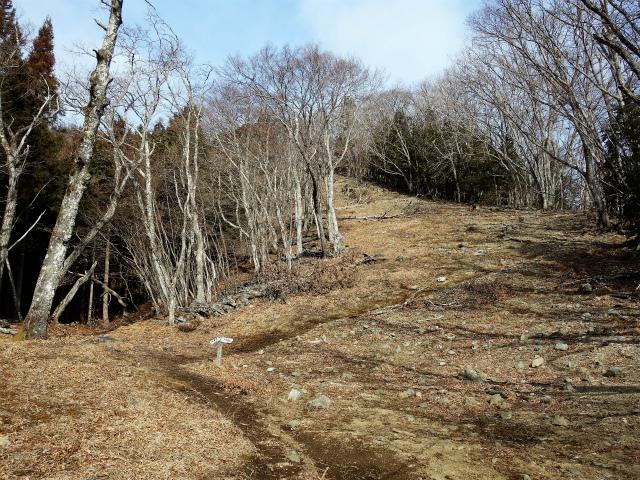 鷹ノ巣山(六ツ石山~石尾根縦走路)登山口コースガイド 幅広い尾根【登山口ナビ】