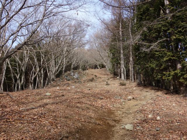 鷹ノ巣山(六ツ石山~石尾根縦走路)登山口コースガイド 幅広い稜線【登山口ナビ】