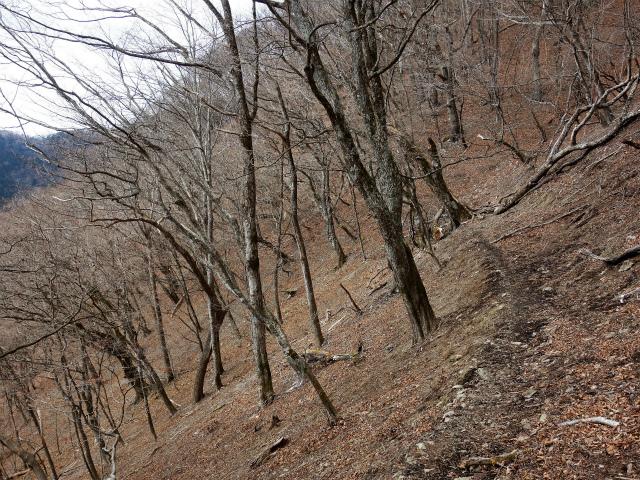 鷹ノ巣山(六ツ石山~石尾根縦走路)登山口コースガイド トラバース路【登山口ナビ】