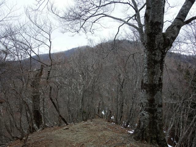 鷹ノ巣山(倉戸口~榧ノ木尾根)登山口コースガイド 水根山【登山口ナビ】