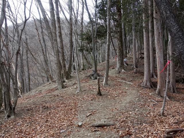 鷹ノ巣山(倉戸口~榧ノ木尾根)登山口コースガイド【登山口ナビ】