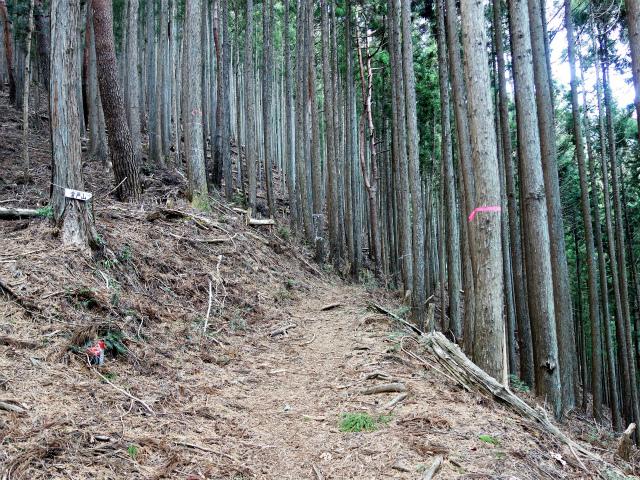 鷹ノ巣山(倉戸口~榧ノ木尾根)登山口コースガイド 植林帯【登山口ナビ】