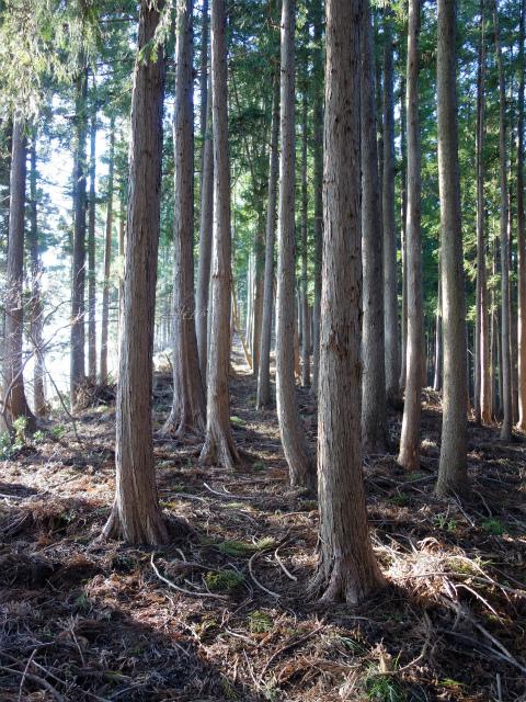 丹沢山(宮ケ瀬~丹沢三峰)登山口コースガイド 植林帯【登山口ナビ】