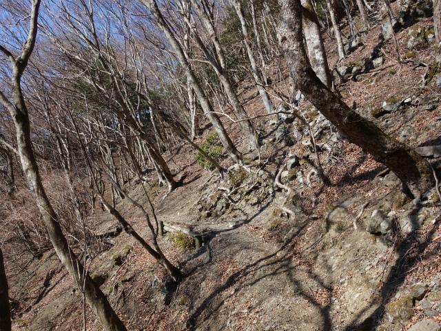 丹沢山(宮ケ瀬~丹沢三峰)登山口コースガイド 松小屋ノ頭のトラバース【登山口ナビ】