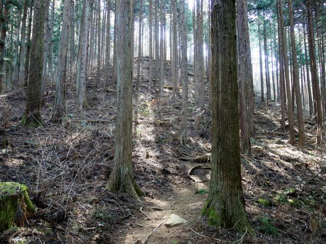 高川山(男坂/女坂~沢コース)登山口コースガイド 植林帯【登山口ナビ】