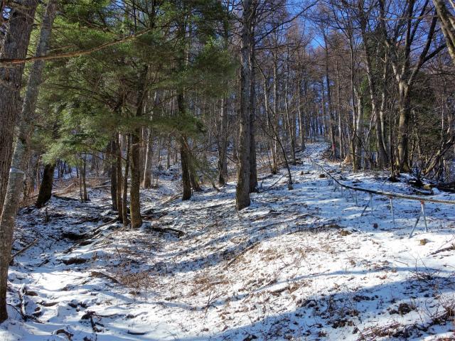 蛭ヶ岳(八丁坂ノ頭~姫次)登山口コースガイド 森林整備モノレールと並行する登山道【登山口ナビ】