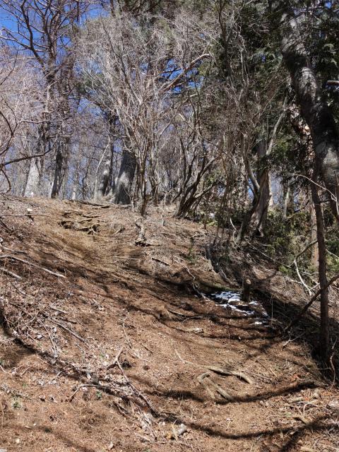 黍殻山(釜立林道~青根分岐)登山口コースガイド 黍殻山の山頂直下【登山口ナビ】