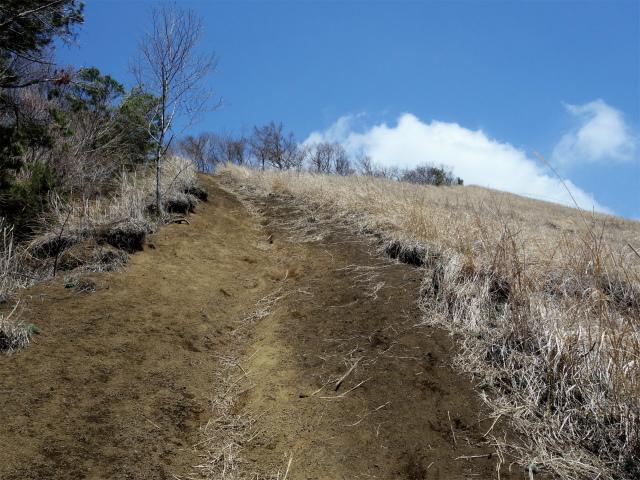 杓子山(鳥居地峠~高座山)登山口コースガイド 急登【登山口ナビ】