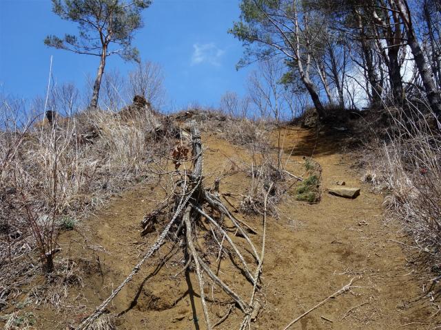 杓子山(鳥居地峠~高座山)登山口コースガイド 山頂直下【登山口ナビ】