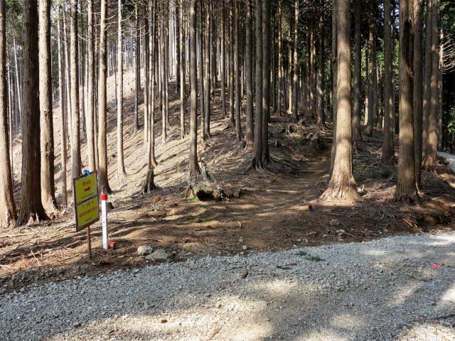 三ノ塔(三ノ塔尾根) 登山口コースガイド 作業道横断【登山口ナビ】