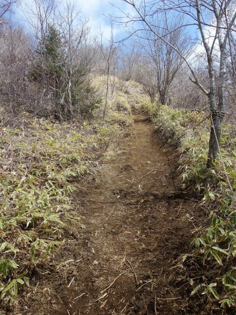 杓子山(鳥居地峠~高座山)登山口コースガイド 山頂直下の急登【登山口ナビ】