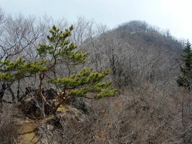 鹿留山(不動湯~杓子山)登山口コースガイド 露岩【登山口ナビ】