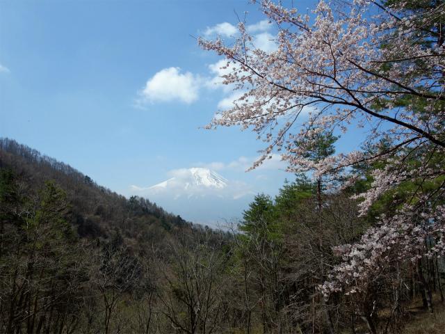 杓子山(鳥居地峠~高座山)登山口コースガイド 大明見林道ゲートの富士山ビュースポット【登山口ナビ】