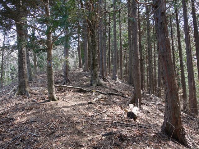 鹿留山(不動湯~杓子山)登山口コースガイド 高座山ログハウス近道【登山口ナビ】