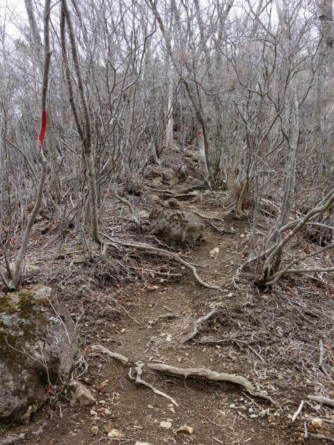 曲岳・黒富士(観音峠大野山林道コース)登山口コースガイド 黒富士山頂直下の急登【登山口ナビ】