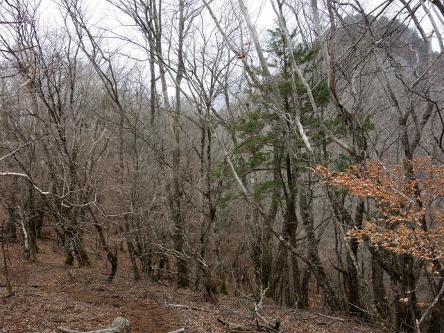 曲岳・黒富士(観音峠大野山林道コース)登山口コースガイド 稜線【登山口ナビ】