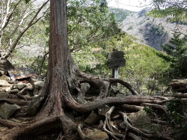 毛無山(不動の滝コース)登山口コースガイド 不動の滝見晴台【登山口ナビ】