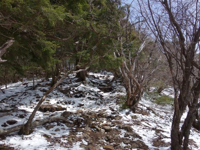 毛無山(不動の滝コース)登山口コースガイド 稜線【登山口ナビ】