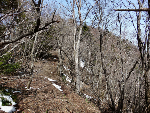 毛無山(地蔵峠コース)登山口コースガイド 丸山からの稜線【登山口ナビ】