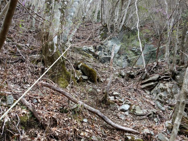毛無山(地蔵峠コース)登山口コースガイド 通行止箇所の下巻き残置ロープ【登山口ナビ】
