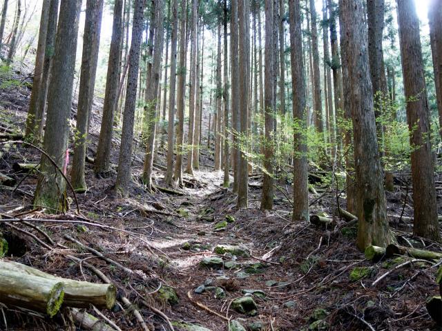 鬼ヶ岳(雪頭ヶ岳~鍵掛峠周回)登山口コースガイド 植林帯【登山口ナビ】