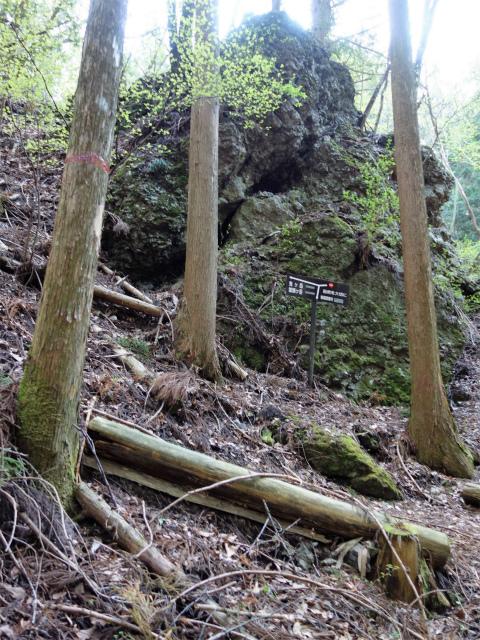 鬼ヶ岳(雪頭ヶ岳~鍵掛峠周回)登山口コースガイド 岩の分岐【登山口ナビ】