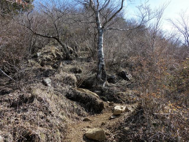 鬼ヶ岳(雪頭ヶ岳~鍵掛峠周回)登山口コースガイド 急登【登山口ナビ】
