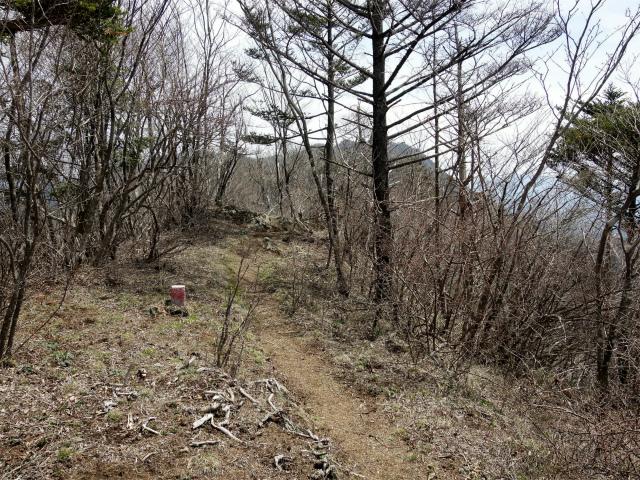 王岳(西湖根場~鍵掛峠周回)登山口コースガイド 稜線のアップダウン【登山口ナビ】