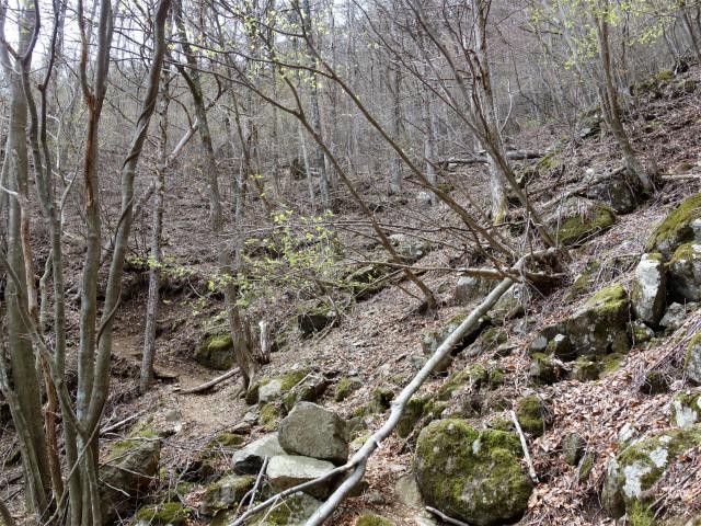 王岳(西湖根場~鍵掛峠周回)登山口コースガイド 源頭【登山口ナビ】