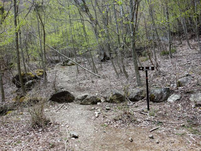 王岳(西湖根場~鍵掛峠周回)登山口コースガイド 登山道入口【登山口ナビ】