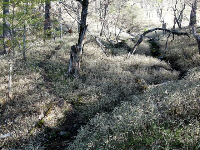 黒金山(桧尾~牛首のタル) 登山口コースガイド コバイケイソウの湿地【登山口ナビ】