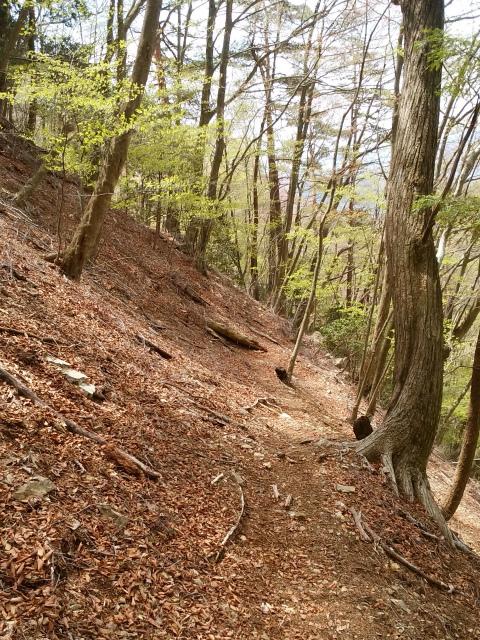 鬼ヶ岳(雪頭ヶ岳~鍵掛峠周回)登山口コースガイド 【登山口ナビ】