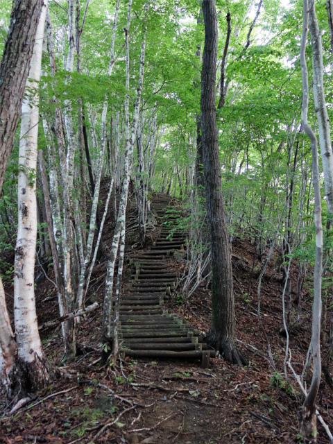 袈裟丸山(郡界尾根~後袈裟~奥袈裟)登山口コースガイド 階段【登山口ナビ】
