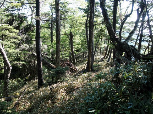 袈裟丸山(郡界尾根~後袈裟~奥袈裟)登山口コースガイド【登山口ナビ】