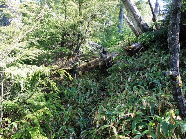 袈裟丸山(郡界尾根~後袈裟~奥袈裟)登山口コースガイド 笹薮と倒木【登山口ナビ】