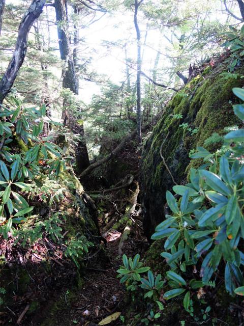 袈裟丸山(郡界尾根~後袈裟~奥袈裟)登山口コースガイド 岩の割れ目【登山口ナビ】