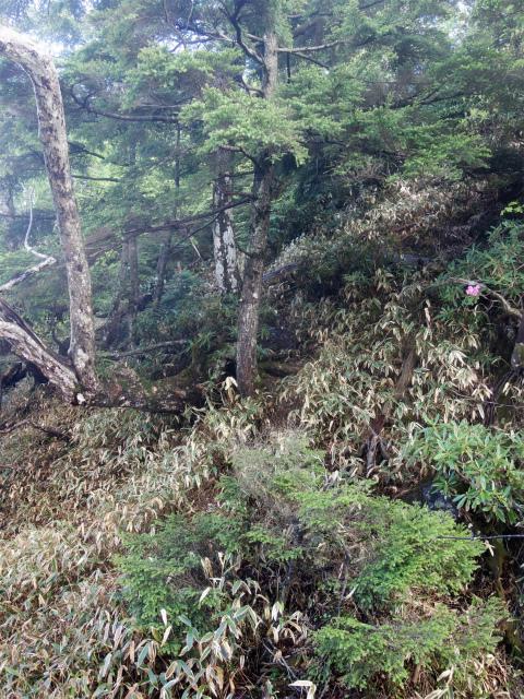 袈裟丸山(郡界尾根~後袈裟~奥袈裟)登山口コースガイド 急谷【登山口ナビ】