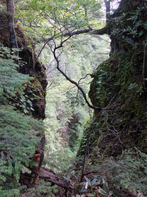 袈裟丸山(郡界尾根~後袈裟~奥袈裟)登山口コースガイド 鞍部の谷間【登山口ナビ】