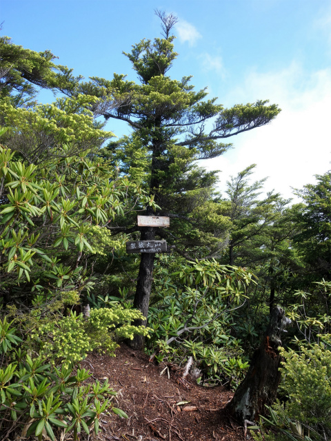袈裟丸山(郡界尾根~後袈裟~奥袈裟)登山口コースガイド 最高峰山頂【登山口ナビ】