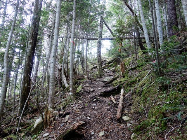 仙丈ヶ岳(地蔵尾根 松峰コース)登山口コースガイド 折り返しの急登【登山口ナビ】