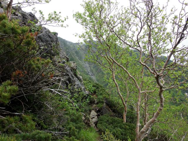 仙丈ヶ岳(地蔵尾根 松峰コース)登山口コースガイド 森林限界付近からの仙塩尾根の稜線【登山口ナビ】