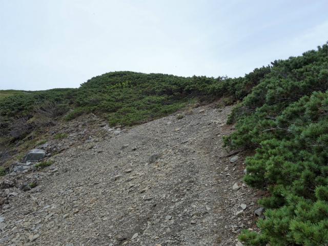 仙丈ヶ岳(地蔵尾根 松峰コース)登山口コースガイド 稜線【登山口ナビ】