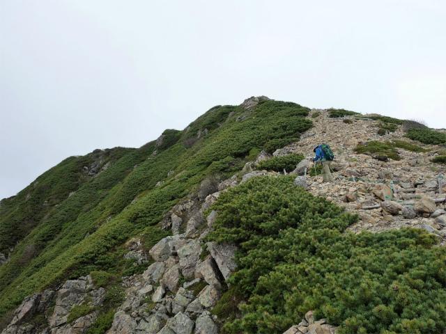 仙丈ヶ岳(北沢峠~小仙丈尾根)登山口コースガイド 砂礫の稜線【登山口ナビ】