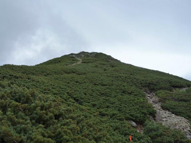 仙丈ヶ岳(北沢峠~小仙丈尾根)登山口コースガイド ハイマツの稜線【登山口ナビ】