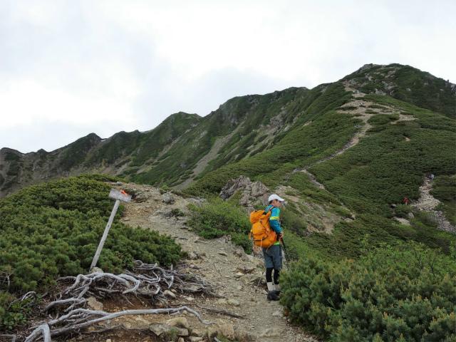 仙丈ヶ岳(北沢峠~小仙丈尾根)登山口コースガイド 八合目【登山口ナビ】