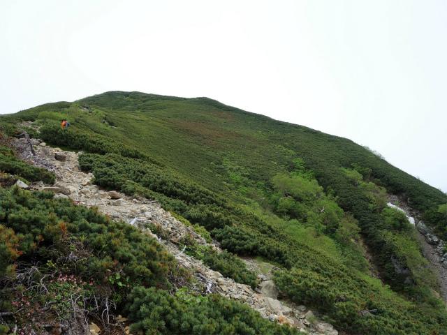 仙丈ヶ岳(北沢峠~小仙丈尾根)登山口コースガイド 稜線【登山口ナビ】